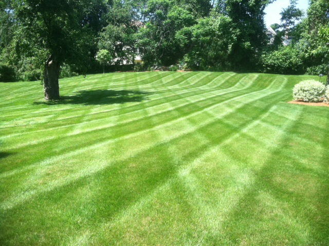 Large lawn with designed mowed into it during lawn maintenance